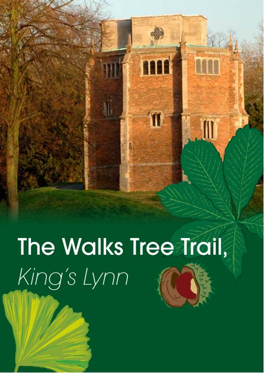 THE WALKS TREE TRAIL
